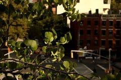 Alberi in Manhattan Fotografie Stock