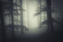 Alberi misteriosi della depressione della nebbia in foresta spaventosa scura Immagini Stock Libere da Diritti