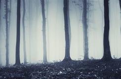 Alberi misteriosi in una foresta con nebbia Immagini Stock Libere da Diritti