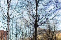 Alberi in molla in anticipo, rami senza foglie immagine stock