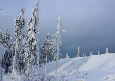 Alberi in montagna Immagine Stock