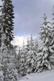 Alberi in montagne Immagini Stock