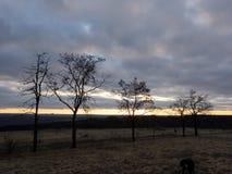 Alberi morti al tramonto all'inverno immagini stock