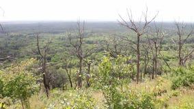 Alberi morti asciutti accanto al verde vivente nel mutamento climatico della foresta Riscaldamento globale Catastrofe ecologica E video d archivio