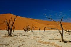 Alberi morti, Deadvlei, Namibia fotografia stock libera da diritti