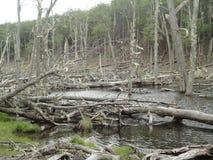 Alberi morti nel fiume Fotografia Stock