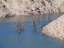Alberi morti nel lago Fotografie Stock
