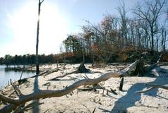 Alberi morti su litorale Fotografia Stock Libera da Diritti