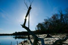 Alberi morti su litorale Immagine Stock