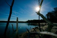 Alberi morti sul bacino idrico del litorale Immagine Stock