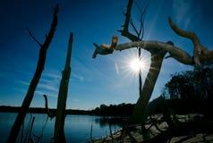 Alberi morti sul bacino idrico del litorale Fotografie Stock
