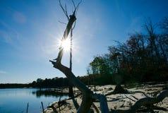 Alberi morti sul bacino idrico del litorale Fotografia Stock
