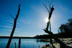 Alberi morti sul bacino idrico del litorale Immagini Stock