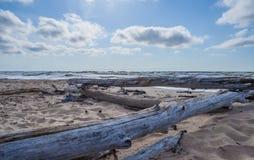 Alberi morti sulla spiaggia soleggiata selvaggia Immagini Stock Libere da Diritti