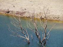 Alberi morti in un lago Fotografia Stock Libera da Diritti