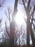 Alberi in natura Immagine Stock