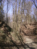 Alberi in natura Fotografia Stock
