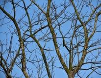 Alberi naturali con la fotografia delle azione del cielo blu Fotografie Stock