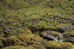 Alberi naturali sulle isole di Auckland, Nuova Zelanda immagini stock libere da diritti