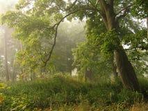 Alberi in nebbia Immagini Stock