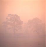 Alberi in nebbia Fotografia Stock