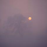 Alberi in nebbia Immagine Stock