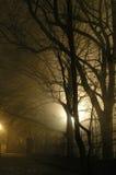 Alberi in nebbia Fotografie Stock Libere da Diritti