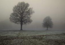 Alberi in nebbia spessa Fotografia Stock