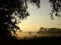 alberi nebbiosi di alba di mattina della nebbia Immagine Stock