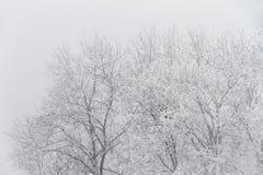 Alberi nebbiosi nell'inverno immagine stock libera da diritti