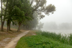 Alberi nebbiosi in parco Fotografia Stock Libera da Diritti
