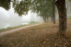 Alberi nebbiosi in parco Fotografie Stock