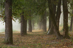 Alberi nebbiosi in parco Immagine Stock Libera da Diritti