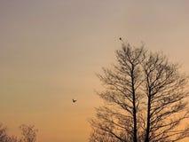Alberi nei colori di alba Fotografie Stock Libere da Diritti