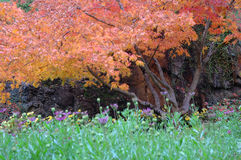 Alberi nei giardini di Butchart immagine stock libera da diritti