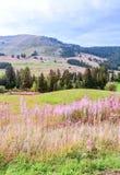 Alberi nei prati della Svizzera Fotografia Stock Libera da Diritti