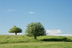 Alberi nel campo Immagini Stock