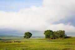 alberi nel campo Fotografie Stock Libere da Diritti