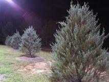 Alberi nel campo alla notte Fotografia Stock