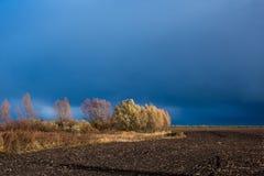 Alberi nel campo prima della tempesta Immagine Stock