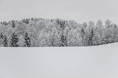 Alberi nel campo vuoto con neve all'inverno Fotografia Stock