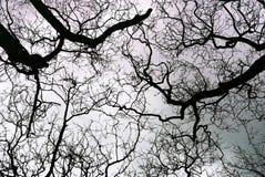 Alberi nel cielo Fotografie Stock