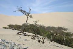 Alberi nel deserto Immagini Stock Libere da Diritti