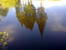 Alberi nel fiume Fotografia Stock Libera da Diritti