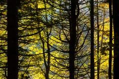 Alberi nel fondo di stagione di autunno Immagini Stock Libere da Diritti