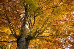 Alberi nel fondo di stagione di autunno Fotografie Stock