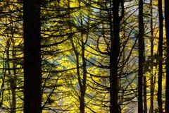 Alberi nel fondo di stagione di autunno Immagine Stock