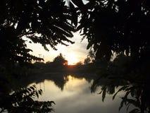 Alberi nel lago Immagine Stock
