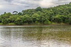 Alberi nel lago Garibaldi in Encantado Immagini Stock Libere da Diritti