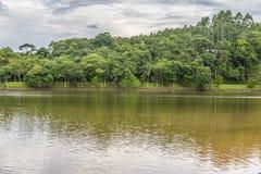 Alberi nel lago Garibaldi in Encantado Fotografie Stock